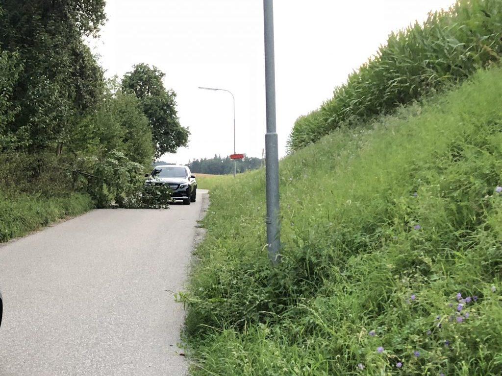 20180729_BaumÜberStraße_Lanzenberg_2